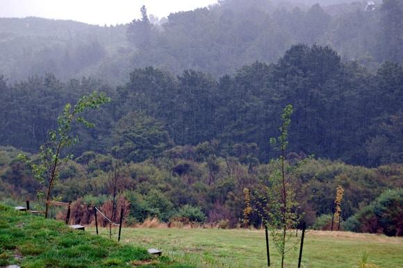 Rain - back view