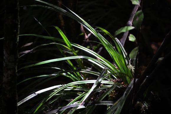 Light on fern