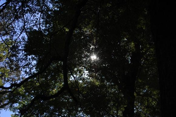 Sun through the canopy