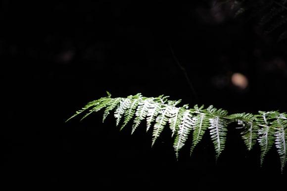 Fern basked in light