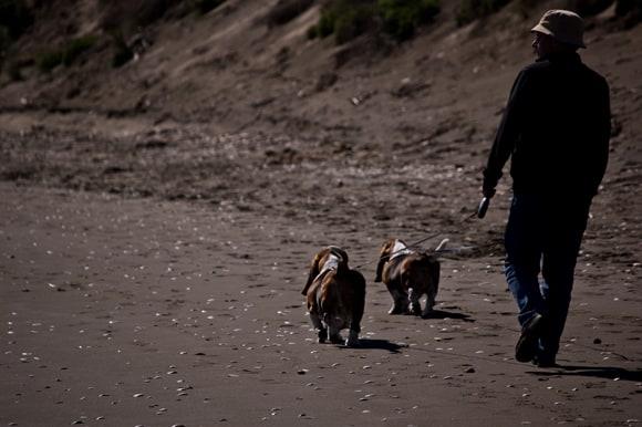 Bassets on beach