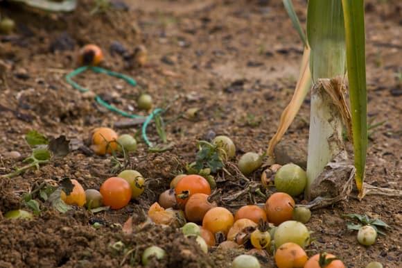 Flop crop