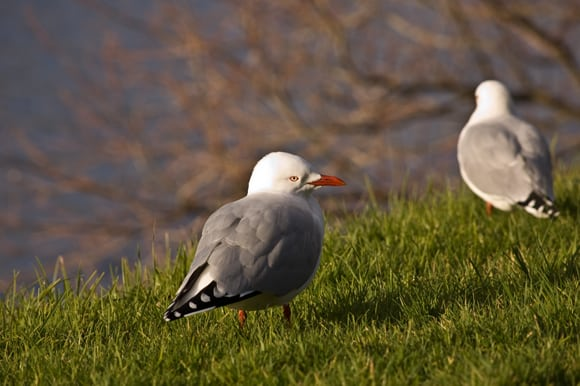 Two gulls in the sun