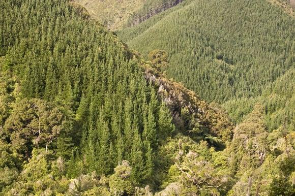Pine clad hillsides