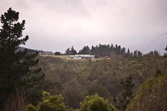 A peak through the trees