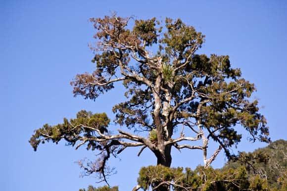 Kaitoke Trees