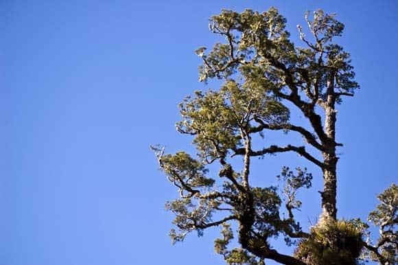 Asymmetrical tree