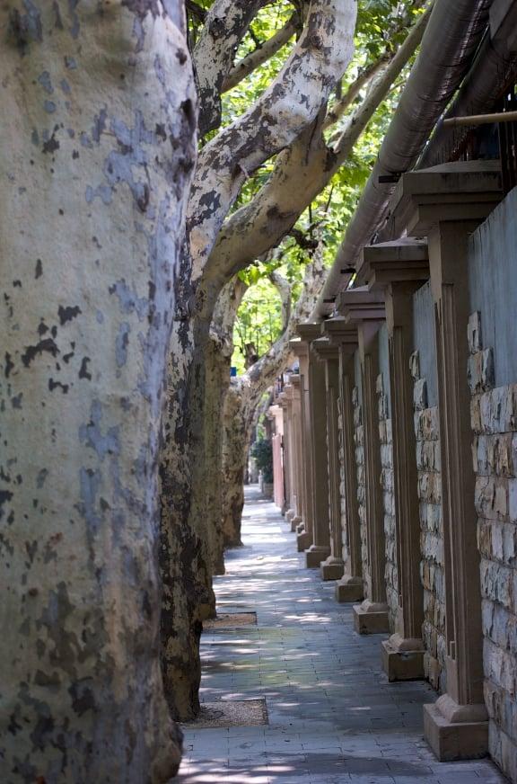 Tree line Shanghai