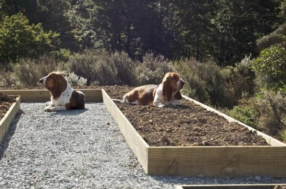 Basset Gardening