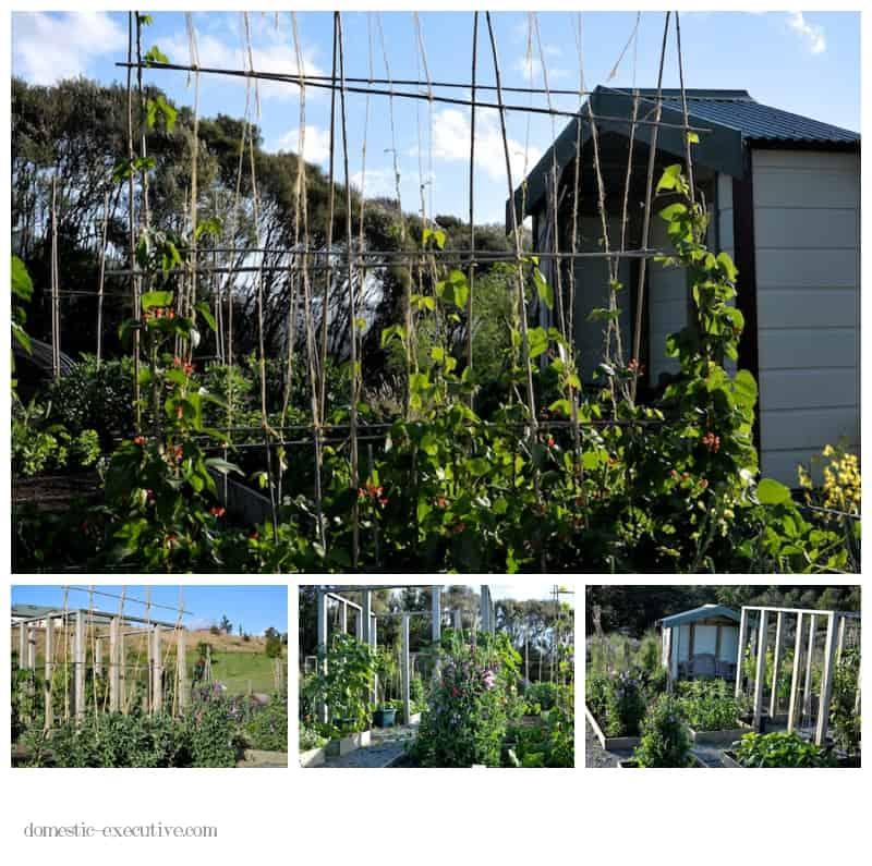 Kitchen Garden 100
