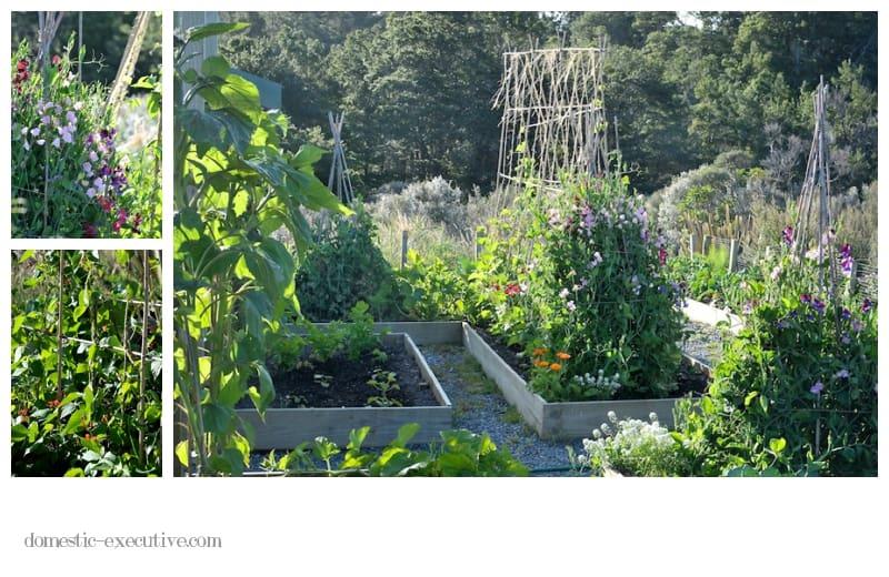 Kitchen Garden 108
