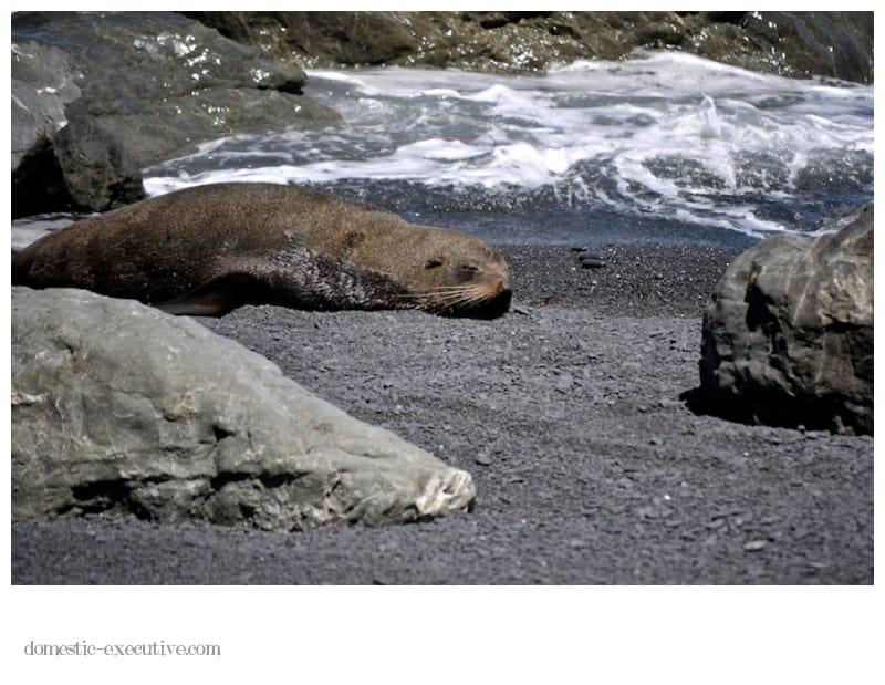 Cape Palliser Seals 136
