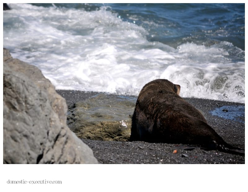 Cape Palliser Seals 139