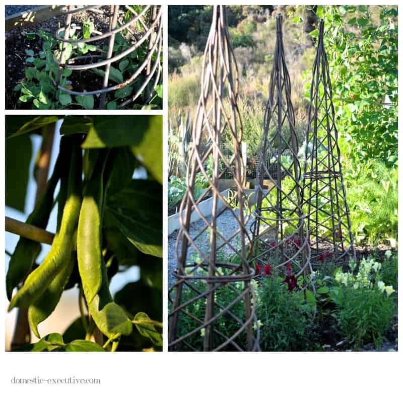Kitchen garden 011
