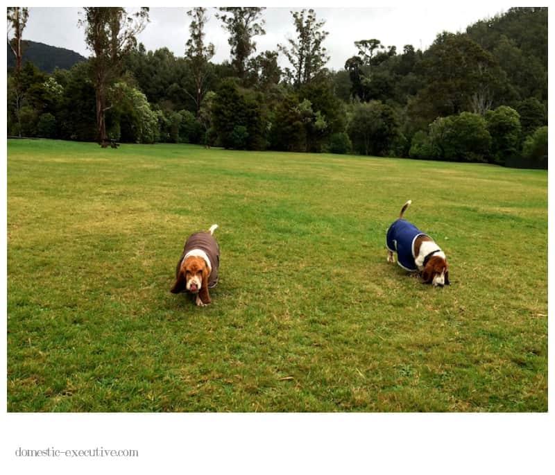Basset Walk  2014-06-121 (1)