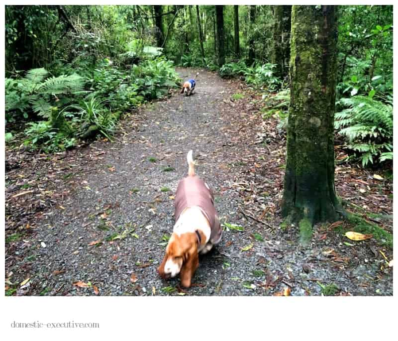 Basset Walk  2014-06-123 (1)
