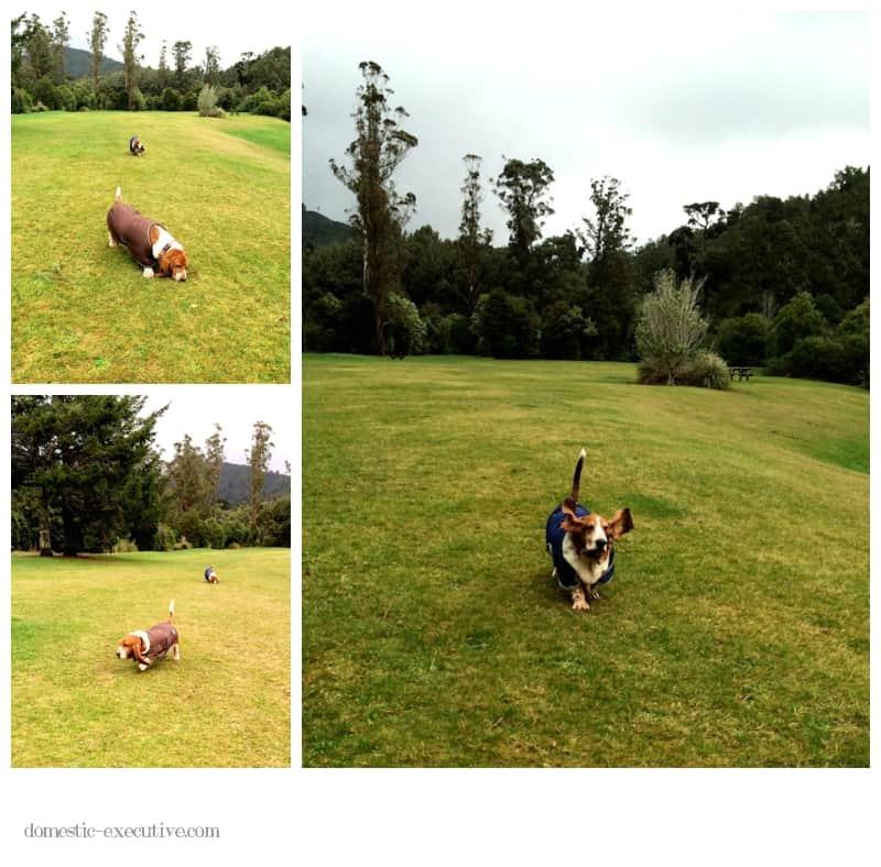 Basset Walk  2014-06-126