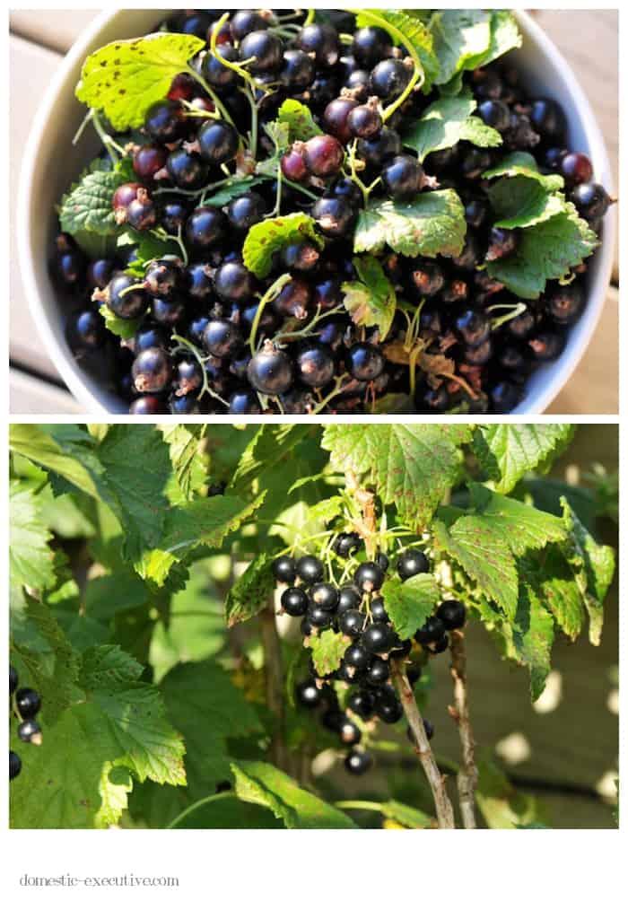 Berries 2015-01-03 (1)