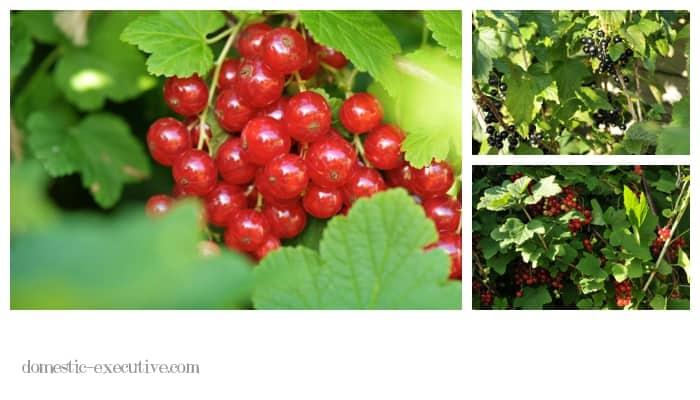 Berries 2015-01-06 (2)